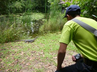 Eternal 888 at Sungei Buloh Part 2 Forest Monitor lizard face off
