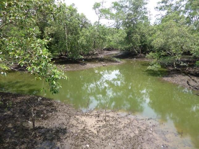Eternal 888 at Sungei Buloh Part 2 marsh land