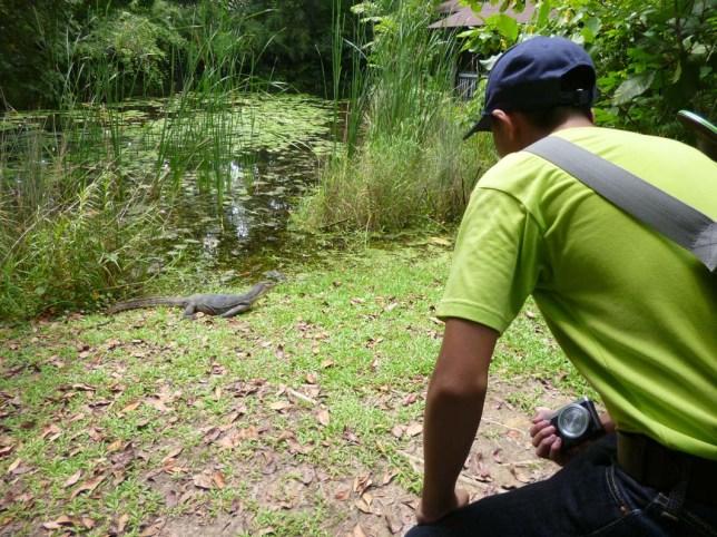 Sungei Buloh Part 2 SD601-00 face off Monitor lizard