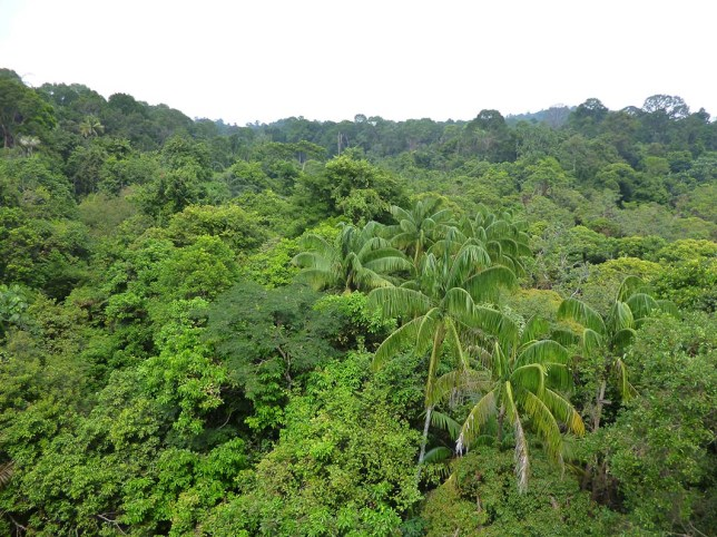 jelutong-tower-forest