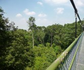Eternal 888 on MacRitchie Tee Top Walk 6